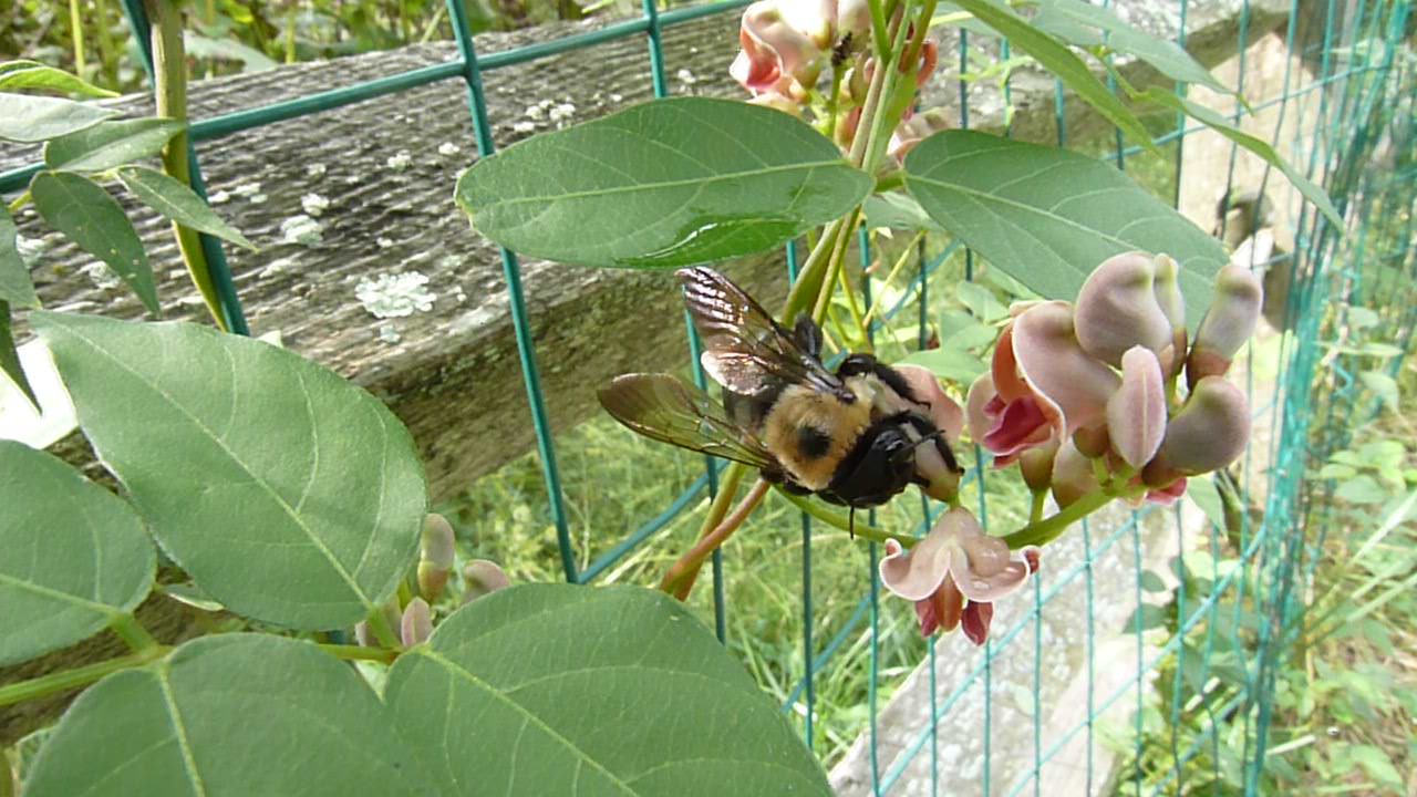 Attracting local native pollinators