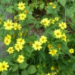 beautiful yellow flowers!!
